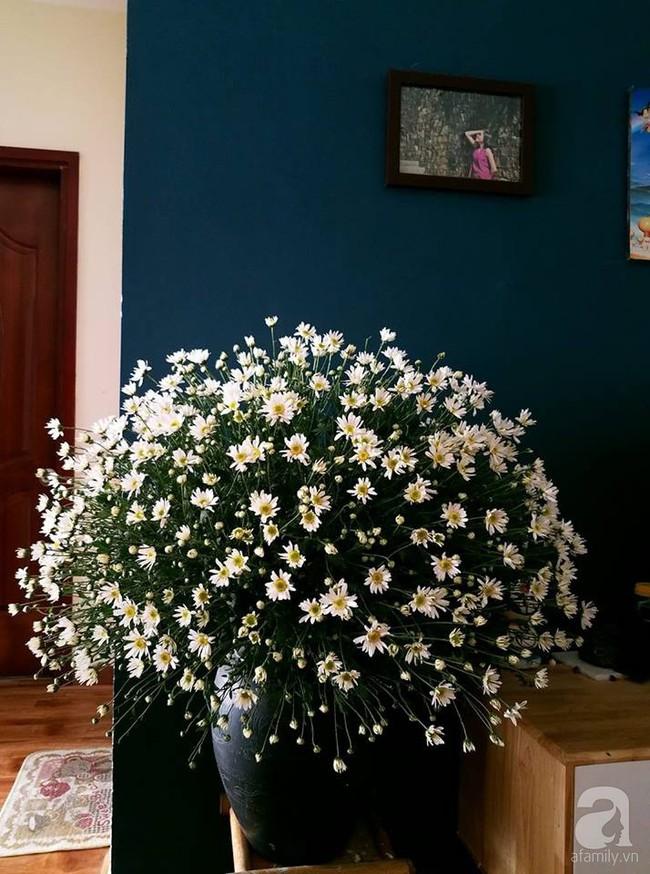 Làm đẹp nhà đón mùa đông Hà Nội với cúc họa mi đẹp dịu dàng, bình yên  - Ảnh 1.