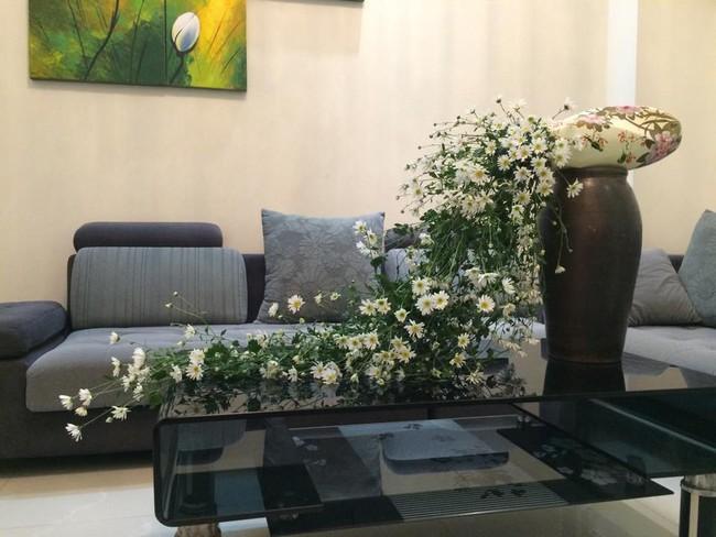 Làm đẹp nhà đón mùa đông Hà Nội với cúc họa mi đẹp dịu dàng, bình yên  - Ảnh 2.