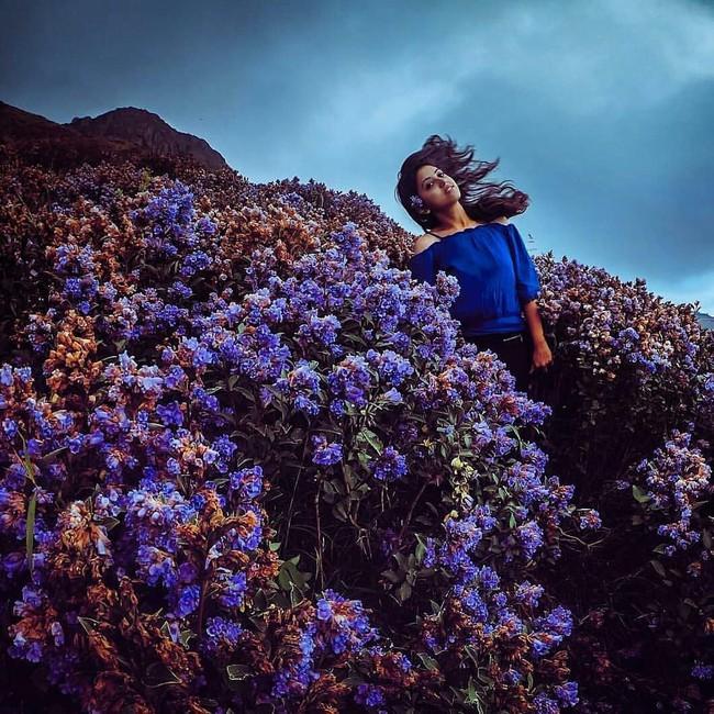 Loài hoa được mệnh danh là bí mật xứ Ấn: 12 năm mới nở một lần, phủ đầy màu tím biếc khắp các ngọn đồi - Ảnh 5.