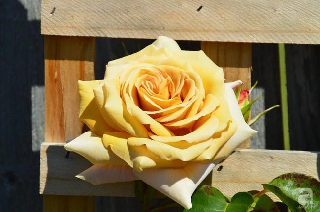 Khu vườn trăm hoa đua nở rực rỡ như chốn thiên đường của người phụ nữ Việt ở Úc - Ảnh 37.