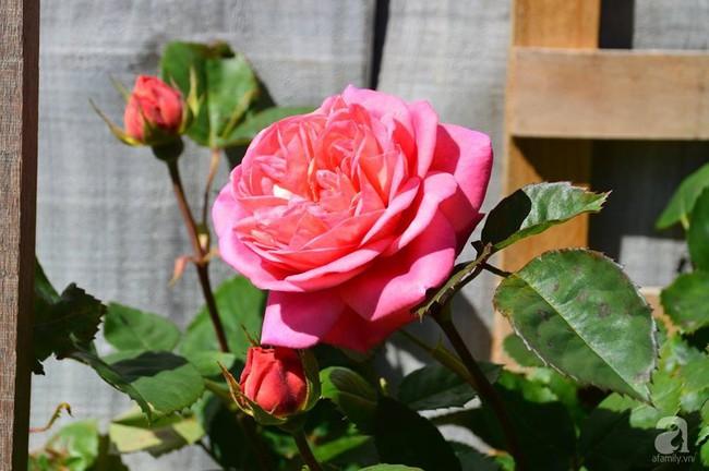 Khu vườn trăm hoa đua nở rực rỡ như chốn thiên đường của người phụ nữ Việt ở Úc - Ảnh 36.