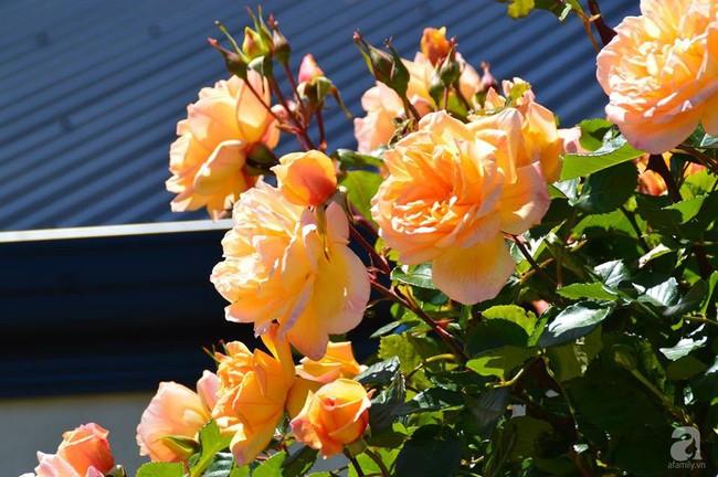 Khu vườn trăm hoa đua nở rực rỡ như chốn thiên đường của người phụ nữ Việt ở Úc - Ảnh 33.