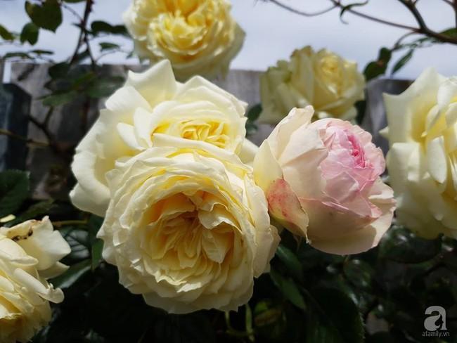 Khu vườn trăm hoa đua nở rực rỡ như chốn thiên đường của người phụ nữ Việt ở Úc - Ảnh 30.