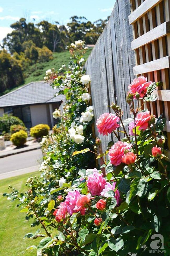 Khu vườn trăm hoa đua nở rực rỡ như chốn thiên đường của người phụ nữ Việt ở Úc - Ảnh 5.