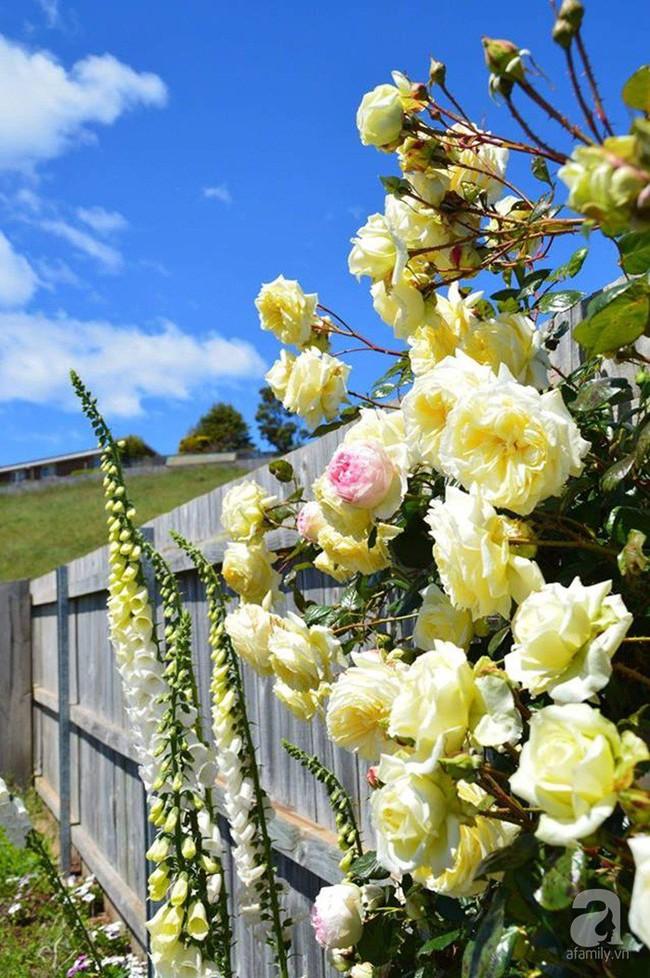 Khu vườn trăm hoa đua nở rực rỡ như chốn thiên đường của người phụ nữ Việt ở Úc - Ảnh 29.