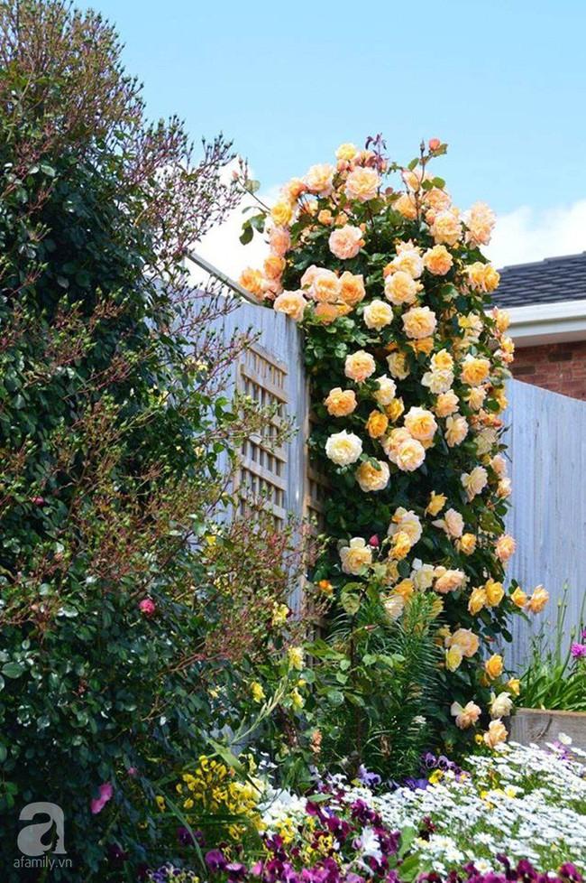 Khu vườn trăm hoa đua nở rực rỡ như chốn thiên đường của người phụ nữ Việt ở Úc - Ảnh 28.