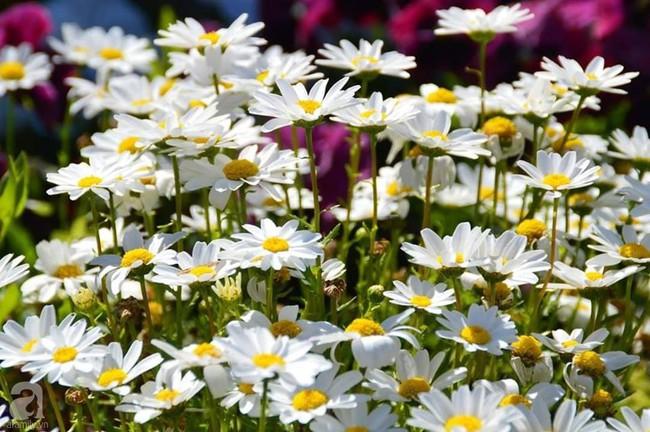 Khu vườn trăm hoa đua nở rực rỡ như chốn thiên đường của người phụ nữ Việt ở Úc - Ảnh 12.