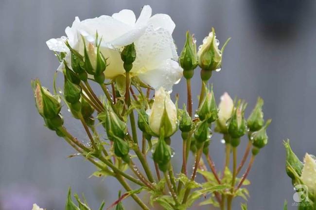 Khu vườn trăm hoa đua nở rực rỡ như chốn thiên đường của người phụ nữ Việt ở Úc - Ảnh 27.