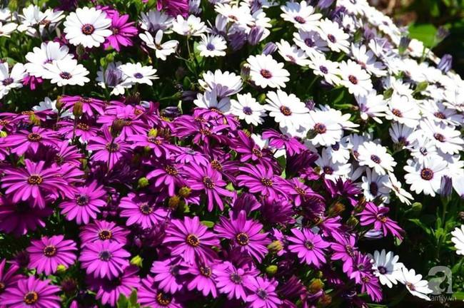 Khu vườn trăm hoa đua nở rực rỡ như chốn thiên đường của người phụ nữ Việt ở Úc - Ảnh 11.