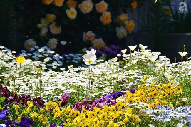 Khu vườn trăm hoa đua nở rực rỡ như chốn thiên đường của người phụ nữ Việt ở Úc - Ảnh 10.