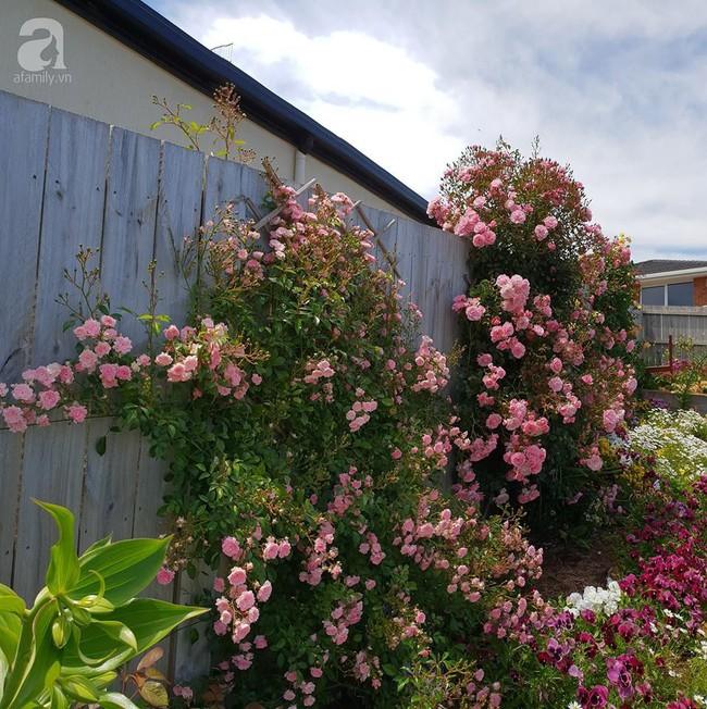 Khu vườn trăm hoa đua nở rực rỡ như chốn thiên đường của người phụ nữ Việt ở Úc - Ảnh 18.