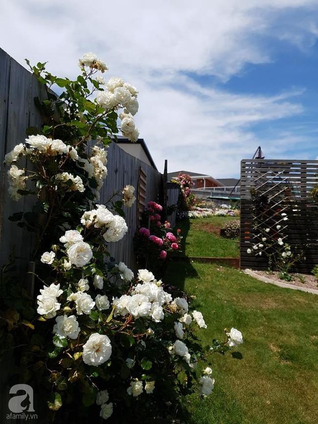 Khu vườn trăm hoa đua nở rực rỡ như chốn thiên đường của người phụ nữ Việt ở Úc - Ảnh 17.