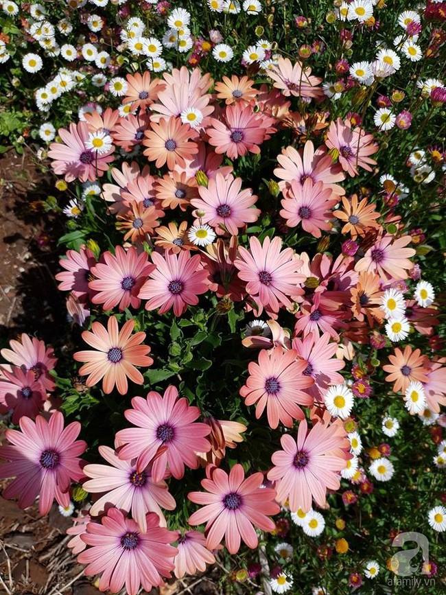 Khu vườn trăm hoa đua nở rực rỡ như chốn thiên đường của người phụ nữ Việt ở Úc - Ảnh 7.