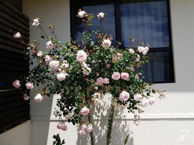 Khu vườn trăm hoa đua nở rực rỡ như chốn thiên đường của người phụ nữ Việt ở Úc - Ảnh 15.