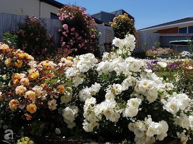 Khu vườn trăm hoa đua nở rực rỡ như chốn thiên đường của người phụ nữ Việt ở Úc - Ảnh 14.