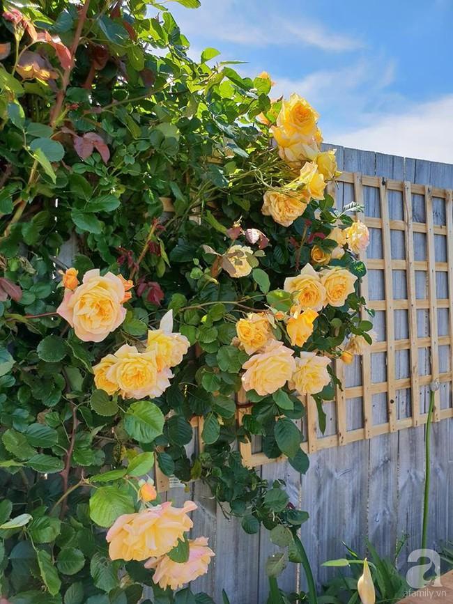 Khu vườn trăm hoa đua nở rực rỡ như chốn thiên đường của người phụ nữ Việt ở Úc - Ảnh 13.