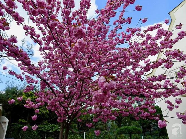 Ngôi nhà với khu vườn 600m² phủ kín các loại hoa đẹp như tranh vẽ của nữ giám đốc Việt ở Hungary - Ảnh 28.