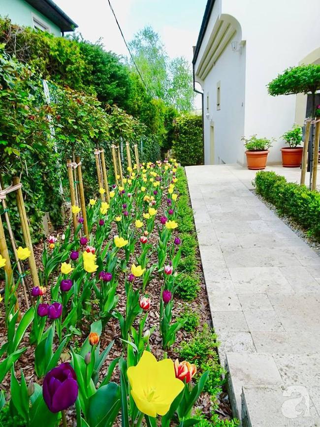 Ngôi nhà với khu vườn 600m² phủ kín các loại hoa đẹp như tranh vẽ của nữ giám đốc Việt ở Hungary - Ảnh 27.