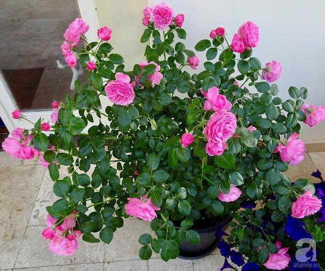 Ngôi nhà với khu vườn 600m² phủ kín các loại hoa đẹp như tranh vẽ của nữ giám đốc Việt ở Hungary - Ảnh 26.