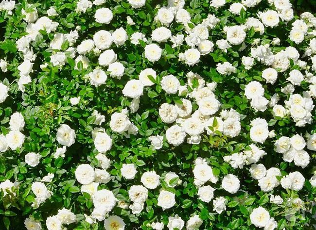Ngôi nhà với khu vườn 600m² phủ kín các loại hoa đẹp như tranh vẽ của nữ giám đốc Việt ở Hungary - Ảnh 25.