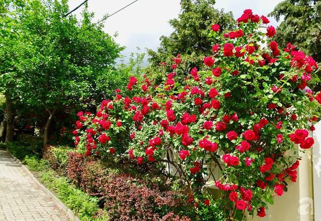 Ngôi nhà với khu vườn 600m² phủ kín các loại hoa đẹp như tranh vẽ của nữ giám đốc Việt ở Hungary - Ảnh 2.