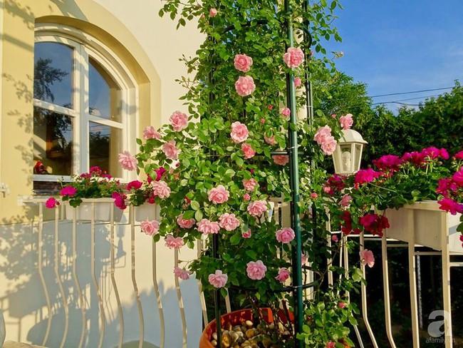 Ngôi nhà với khu vườn 600m² phủ kín các loại hoa đẹp như tranh vẽ của nữ giám đốc Việt ở Hungary - Ảnh 13.