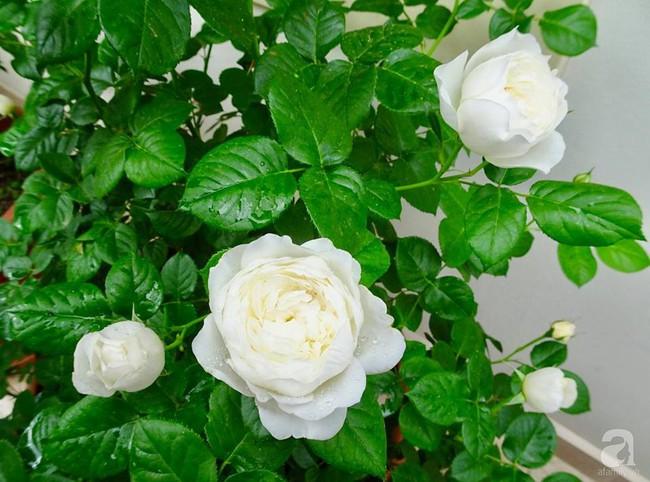 Ngôi nhà với khu vườn 600m² phủ kín các loại hoa đẹp như tranh vẽ của nữ giám đốc Việt ở Hungary - Ảnh 12.
