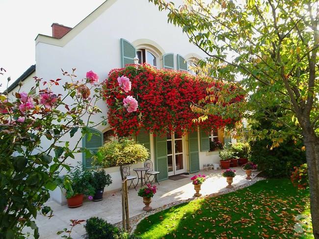 Ngôi nhà với khu vườn 600m² phủ kín các loại hoa đẹp như tranh vẽ của nữ giám đốc Việt ở Hungary - Ảnh 18.
