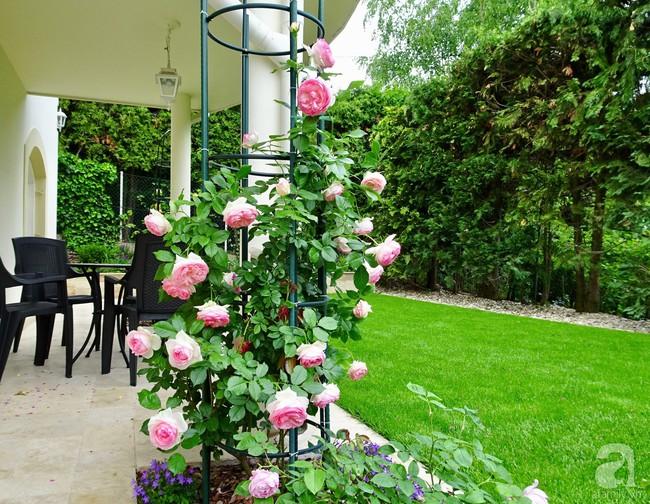 Ngôi nhà với khu vườn 600m² phủ kín các loại hoa đẹp như tranh vẽ của nữ giám đốc Việt ở Hungary - Ảnh 9.