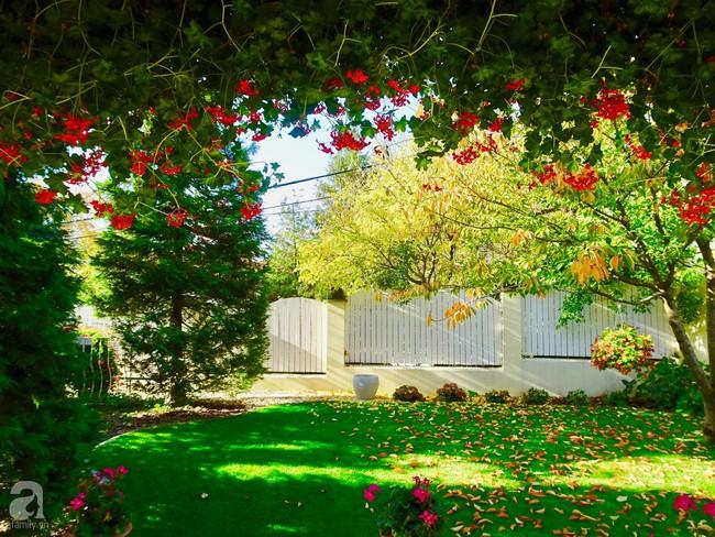 Ngôi nhà với khu vườn 600m² phủ kín các loại hoa đẹp như tranh vẽ của nữ giám đốc Việt ở Hungary - Ảnh 17.