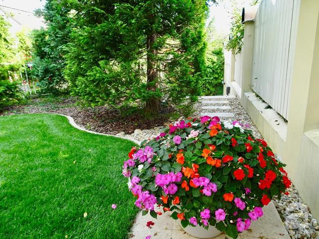 Ngôi nhà với khu vườn 600m² phủ kín các loại hoa đẹp như tranh vẽ của nữ giám đốc Việt ở Hungary - Ảnh 24.