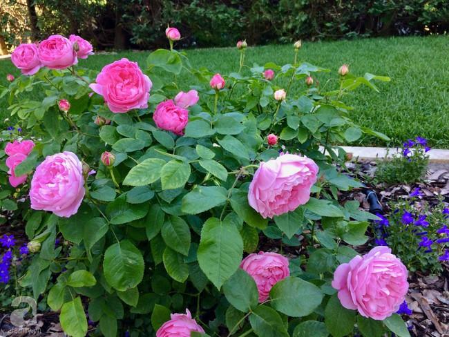 Ngôi nhà với khu vườn 600m² phủ kín các loại hoa đẹp như tranh vẽ của nữ giám đốc Việt ở Hungary - Ảnh 8.