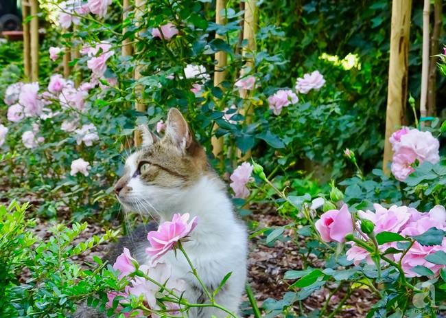 Ngôi nhà với khu vườn 600m² phủ kín các loại hoa đẹp như tranh vẽ của nữ giám đốc Việt ở Hungary - Ảnh 7.