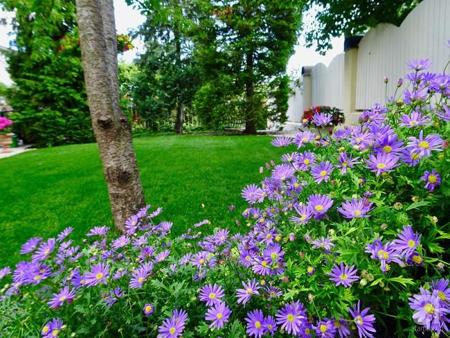 Ngôi nhà với khu vườn 600m² phủ kín các loại hoa đẹp như tranh vẽ của nữ giám đốc Việt ở Hungary - Ảnh 22.