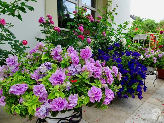 Ngôi nhà với khu vườn 600m² phủ kín các loại hoa đẹp như tranh vẽ của nữ giám đốc Việt ở Hungary - Ảnh 20.