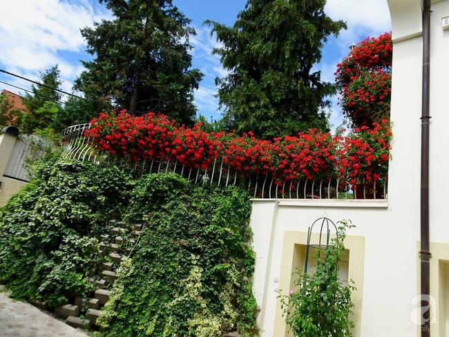 Ngôi nhà với khu vườn 600m² phủ kín các loại hoa đẹp như tranh vẽ của nữ giám đốc Việt ở Hungary - Ảnh 15.