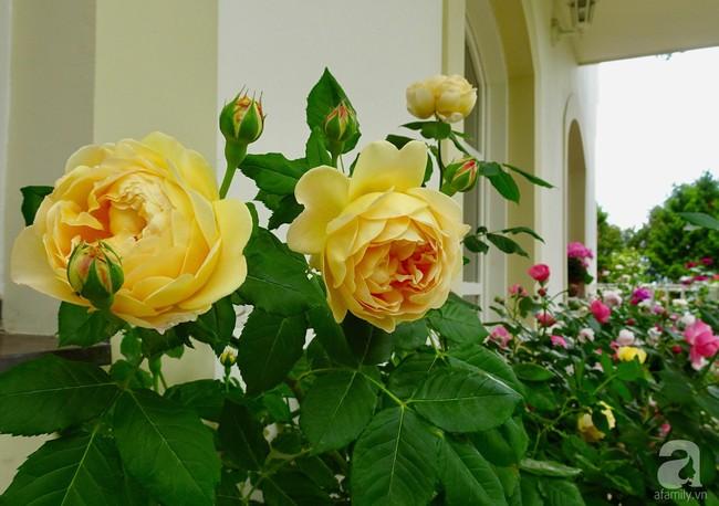 Ngôi nhà với khu vườn 600m² phủ kín các loại hoa đẹp như tranh vẽ của nữ giám đốc Việt ở Hungary - Ảnh 6.
