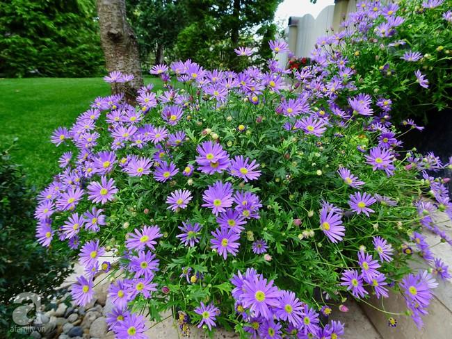 Ngôi nhà với khu vườn 600m² phủ kín các loại hoa đẹp như tranh vẽ của nữ giám đốc Việt ở Hungary - Ảnh 19.