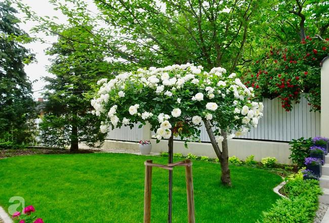 Ngôi nhà với khu vườn 600m² phủ kín các loại hoa đẹp như tranh vẽ của nữ giám đốc Việt ở Hungary - Ảnh 5.