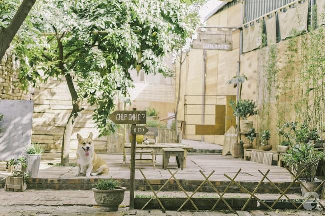 Chàng trai 8X đam mê nhiếp ảnh biến mảnh đất hoang thành khu vườn đậm màu Vintage rộng 20m² ở Hà Nội - Ảnh 3.