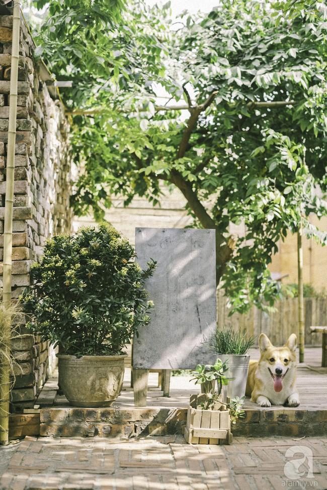 Chàng trai 8X đam mê nhiếp ảnh biến mảnh đất hoang thành khu vườn đậm màu Vintage rộng 20m² ở Hà Nội - Ảnh 8.