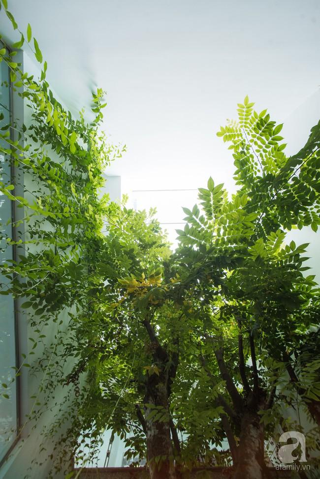 Nhà vườn đầy bóng nắng và cây xanh rộng 700m², được cải tạo lại từ 6 căn nhà liền kề của đôi vợ chồng trẻ giữa trung tâm xứ Thanh - Ảnh 4.