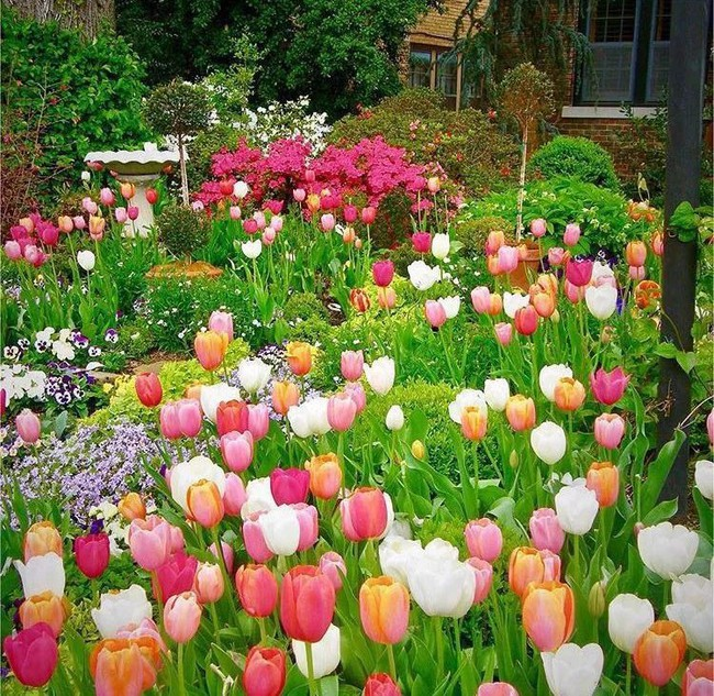 Vì tuổi thơ bất hạnh, người phụ nữ dành 20 năm để biến mơ ước tạo một khu vườn cổ tích trở thành hiện thực - Ảnh 4.