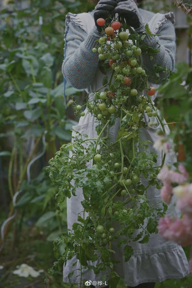 Khu vườn dịu dàng nét xuân, trăm hoa đua nở trên sân thượng 88m² của bà mẹ hai con  - Ảnh 29.