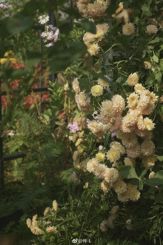 Khu vườn dịu dàng nét xuân, trăm hoa đua nở trên sân thượng 88m² của bà mẹ hai con  - Ảnh 28.