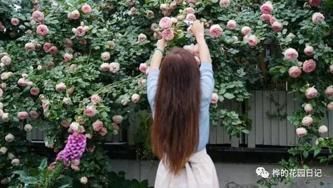 Khu vườn dịu dàng nét xuân, trăm hoa đua nở trên sân thượng 88m² của bà mẹ hai con  - Ảnh 21.