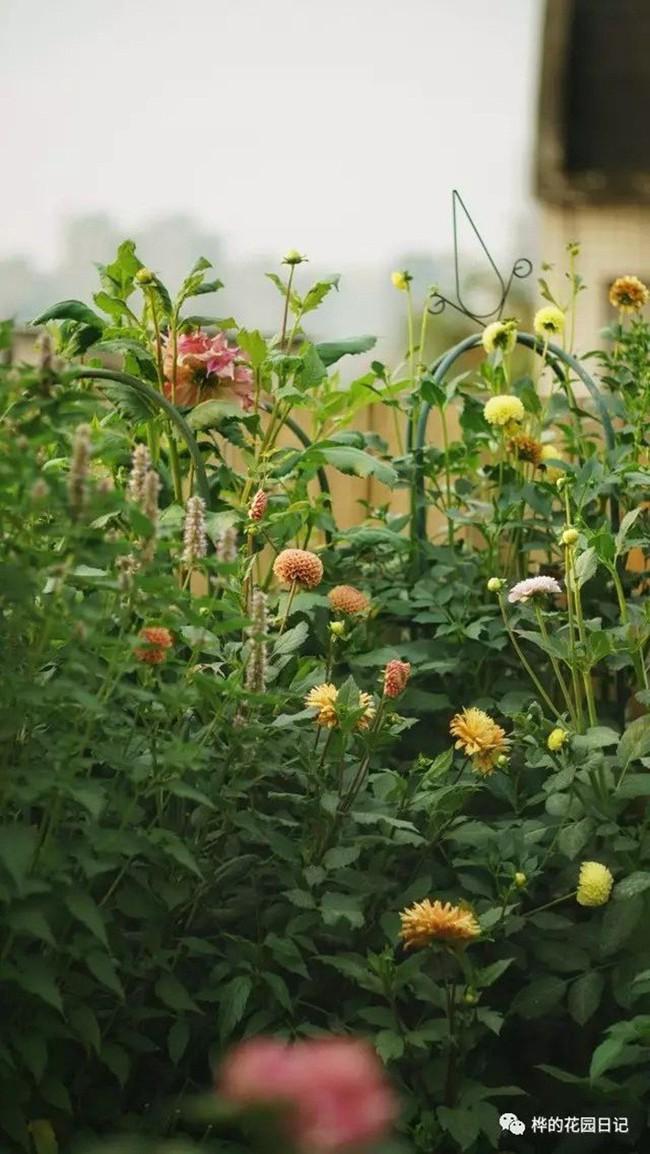 Khu vườn dịu dàng nét xuân, trăm hoa đua nở trên sân thượng 88m² của bà mẹ hai con  - Ảnh 8.