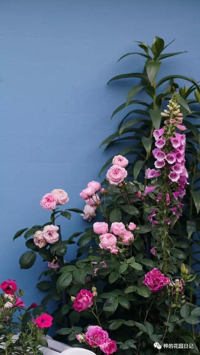 Khu vườn dịu dàng nét xuân, trăm hoa đua nở trên sân thượng 88m² của bà mẹ hai con  - Ảnh 4.