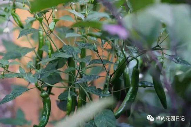 Khu vườn dịu dàng nét xuân, trăm hoa đua nở trên sân thượng 88m² của bà mẹ hai con  - Ảnh 30.