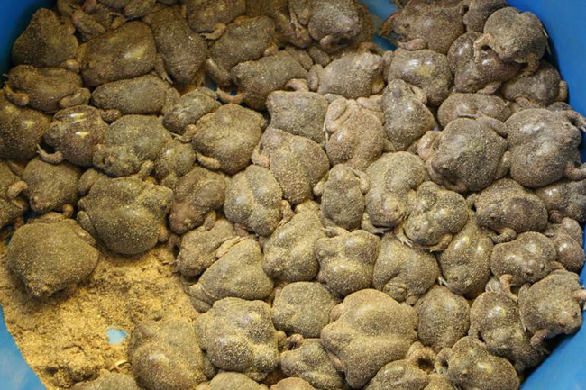 Ếch òn nguyên con - món ăn khiến nhiều người khiếp vía khi vừa nhìn thấy này lại là đặc sản ở Việt Nam và cả Thái Lan - Ảnh 3.